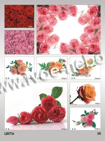 Каталог фотопечати цветы